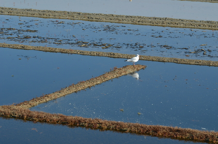 salt marshes on the island of Re- France