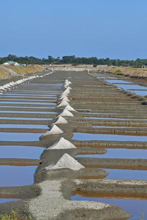salt marsh on the island of Re - France Stock Photo