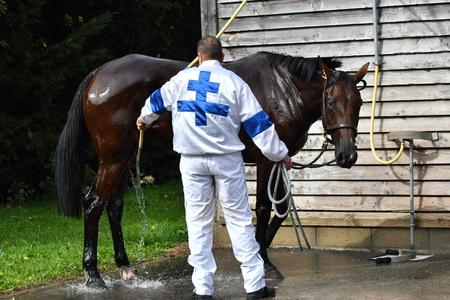 race horse shower