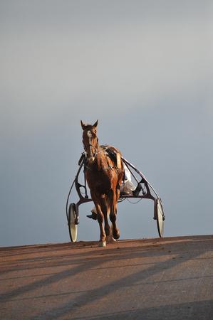 horse race in sulky Stockfoto - 124990765