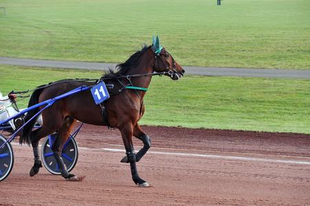horse race in sulky Stockfoto - 124990804
