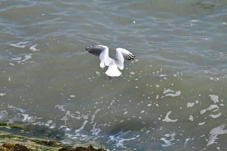 gulls in flight by the sea Banco de Imagens
