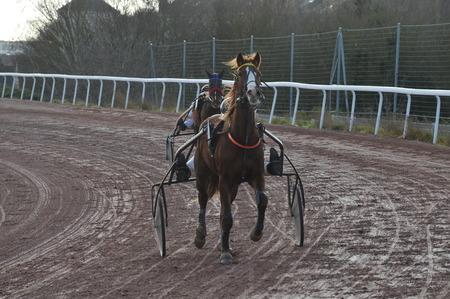 horse race in sulky Stockfoto - 124999229