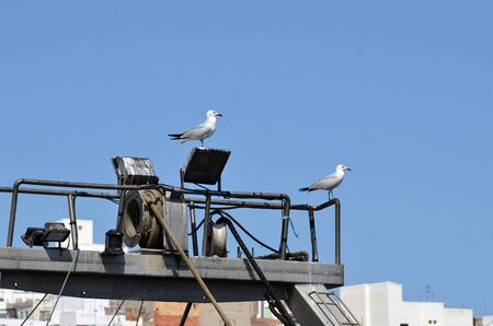 seagulls on the rail of a boat