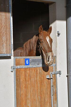 race horse head in his box Stock Photo