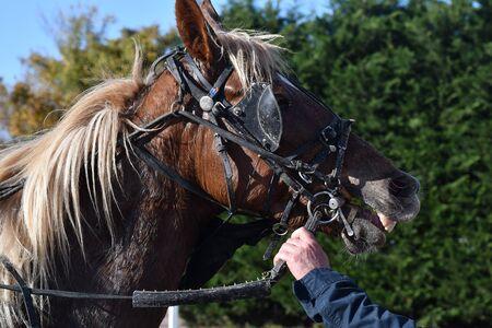 race horse head