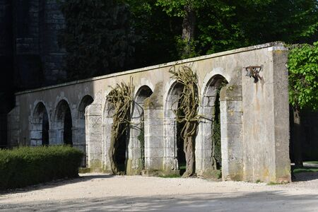 wisteria trunks on walls