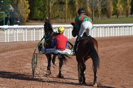 horses race Stockfoto