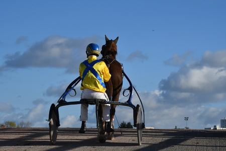 horse race trotting Stockfoto - 129583690