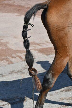 ponytail 版權商用圖片
