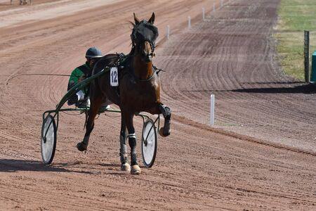 horse race in a trot