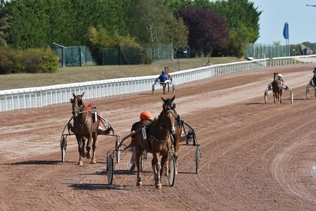 horse race in a trot 版權商用圖片 - 132137016