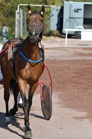 race horse trotting Stockfoto