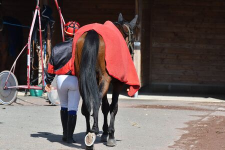 racehorse and his jockey after the race Stockfoto
