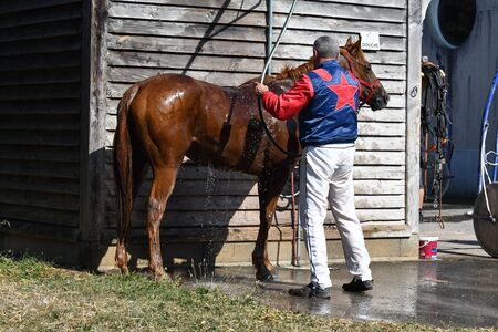 horse, shower, horse racing, therapist, care, water jet, racecourse