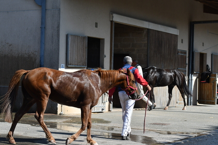 Race horse with trainer.