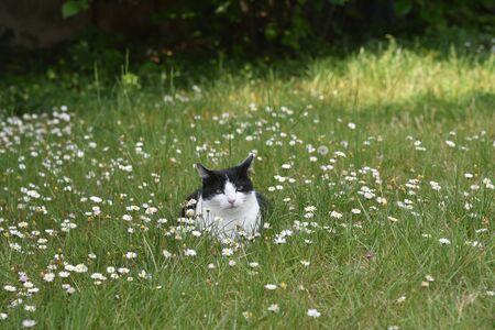 cat in the meadow Фото со стока