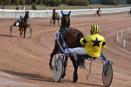 horse race in sulky Фото со стока