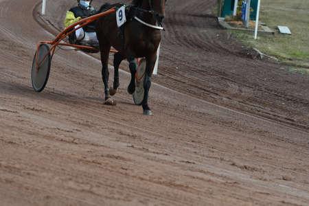 race horse front legs