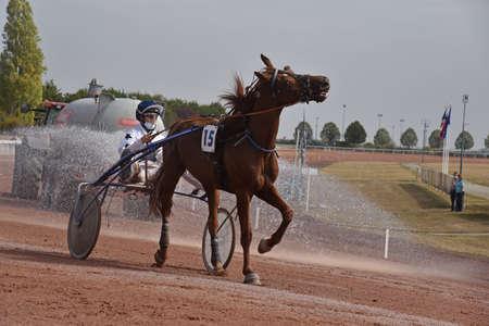 harnessed horse race Фото со стока