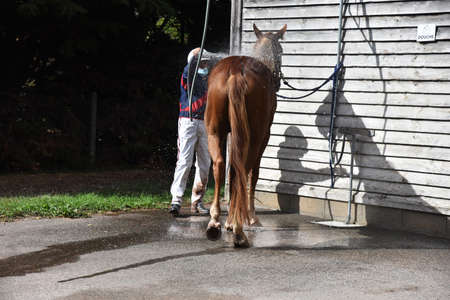 racehorse shower after competition