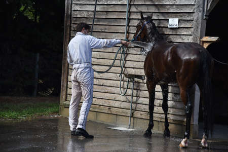 washing a racehorse after competition 版權商用圖片