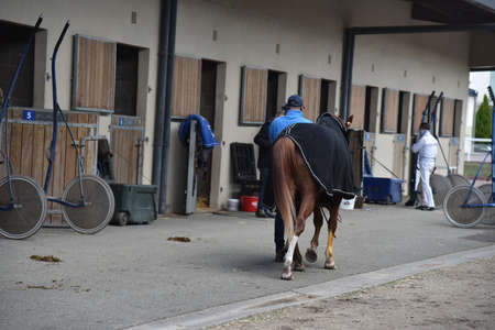 racehorse after competition with his trainer
