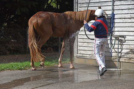washing the racehorse after competition