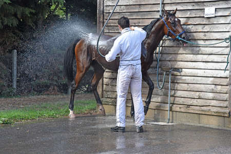 washing a racehorse after competition 新聞圖片