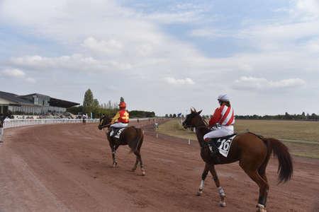 jockey on his horse for a race Stockfoto