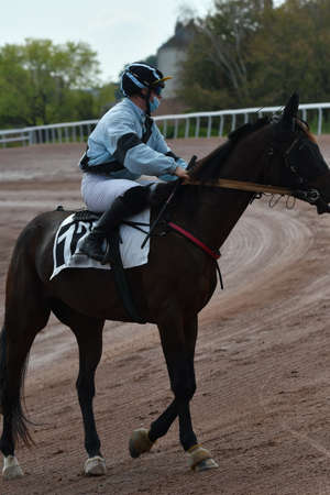 jockey on his horse for a race Redactioneel