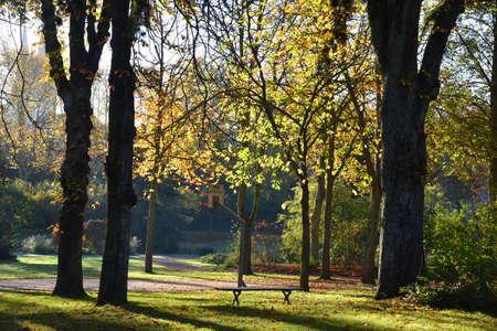 autumn landscape in a park