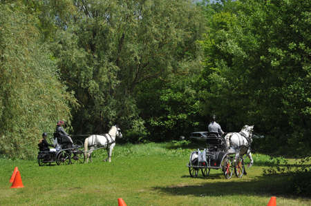 horse-drawn carriage competition