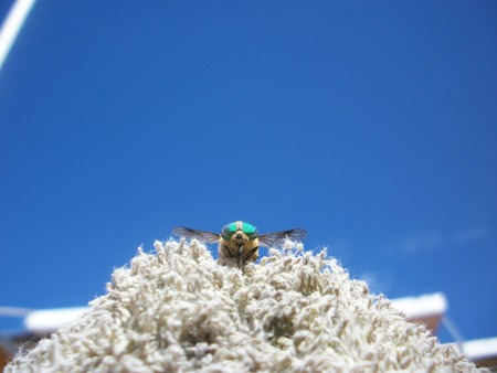 insecta: Ready to fly