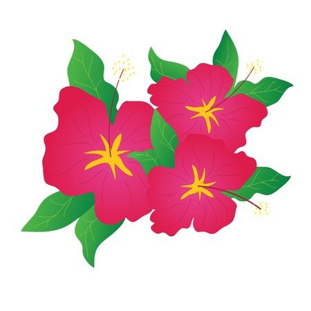 Hibiscus flowers Stock Photo - 9646750