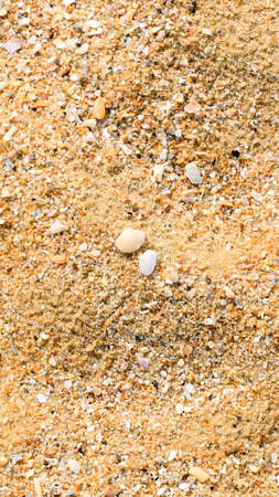 Tropical Sand beach background with corals and seashells of aquatic animals and molluscs