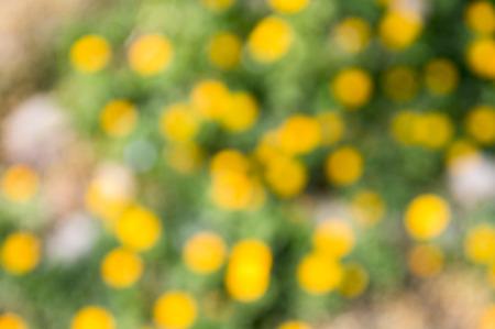 春タンポポの画像
