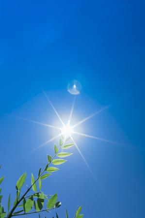 등나무 잎과 푸른 하늘의 배경에 햇빛