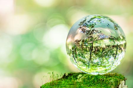 MOSS y globos de vidrio