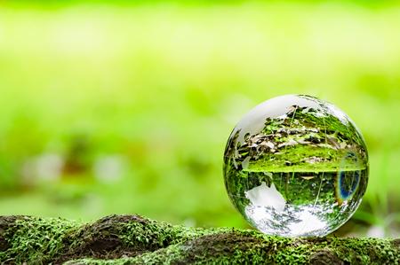 Moss and glass globe Фото со стока
