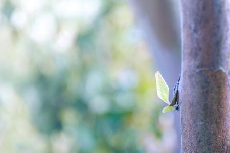 Stewartia tree sprouts (pastel) 版權商用圖片
