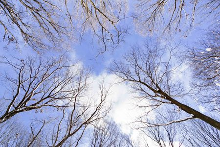 Grove of winter sky in the background 版權商用圖片