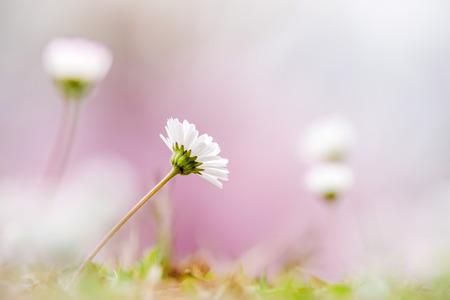 Dainty little white flowers