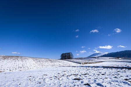 The hill of larch in the snow scenery and Mt. Asama
