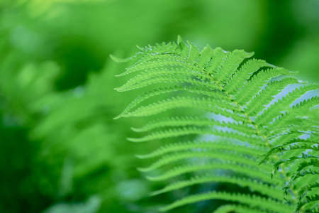 Fern leaves with green background
