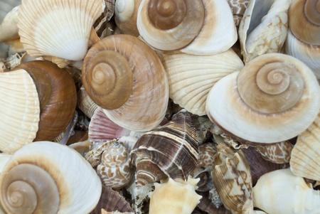 Florida Seashells Imagens