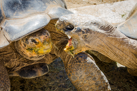 Turtle San Diego Zoo
