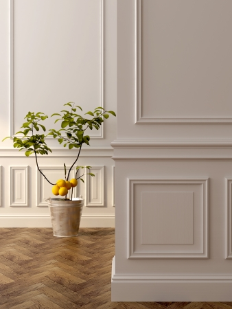 lemon tree: A beautiful lemon tree in the classic interior