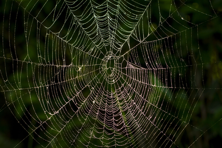 A spiders Web Stockfoto