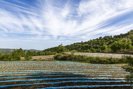 farmland scenery